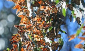wildlife_images_butterflys
