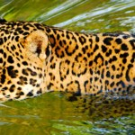 Brazilian Pantanal is a must for the true wildlife lover