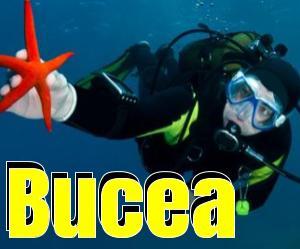 Bucea