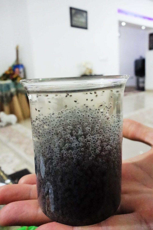 napoje ze świata
