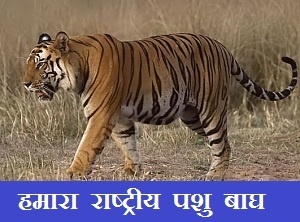 Essay On Tiger In Hindi Language