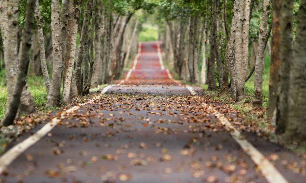 Reflexionando por el Camino