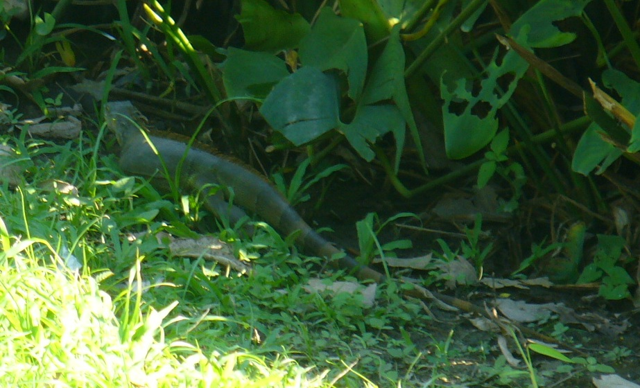 Aves de Humedal II (5/6)