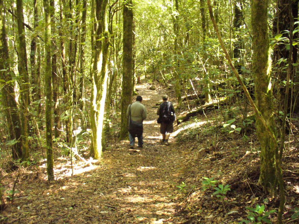 Fotos Parque Nacional La Tigra (5/6)