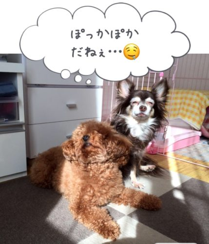 保護犬・全盲の犬ひかり
