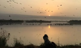 Agamon Hula Sunrise Tour in a Safari Wagon