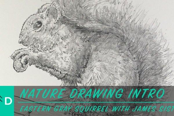 intro-gray_squirrel-thumbnail
