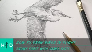 how_to_draw-birds_in_flight-thumbnail