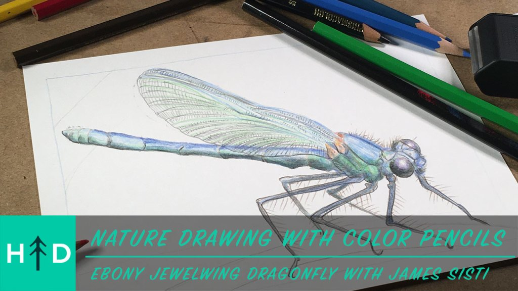 how to draw a dragonfly in color pencil