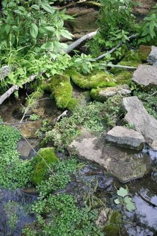Greenery at Gorman Falls. (JP)