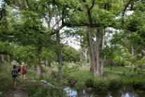 Along Gorman Springs Trail. (JP)