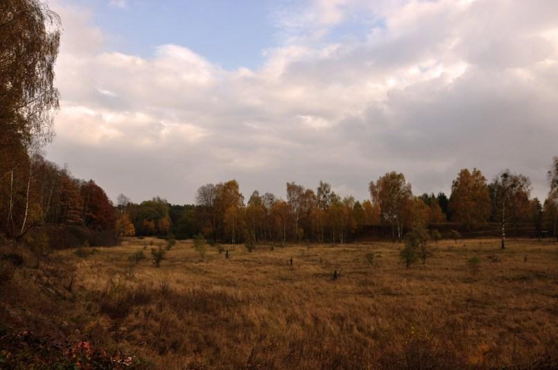 Grumsin Unesco Naturerbe Schorfheide