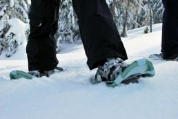SnowshoePhoto