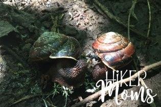 Maple Ridge Trail Estacada ORegon Milo McIver STate Park HIker Moms 4