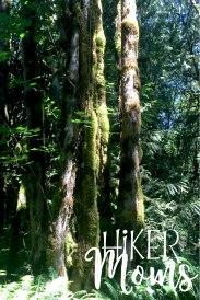 Maple Ridge Trail Estacada ORegon Milo McIver STate Park HIker Moms Large trees