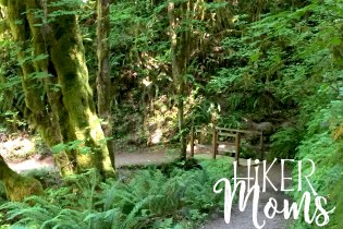 Hiker Moms Silver Falls State Park Silverton Sublimity Oregon Twin Falls Upper North Falls Middle North Falls Winter Falls hike Kids cute bridge