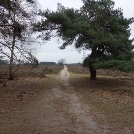 Heidezicht wandeling, vrijdag 15 januari 2021