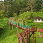 Bukit Larut Hanging Bridge