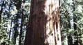 Hiking Among the Redwoods in California's Muir Woods