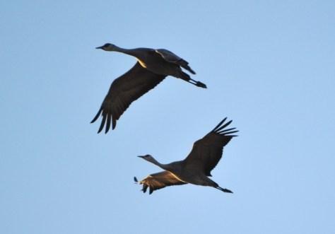 crane pair2