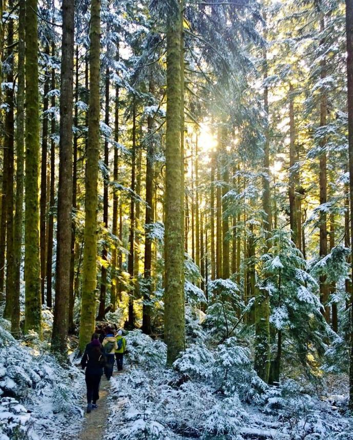 lynn loop hiking trail, lynn headwaters regional park, north vancouver, hikes near vancouver
