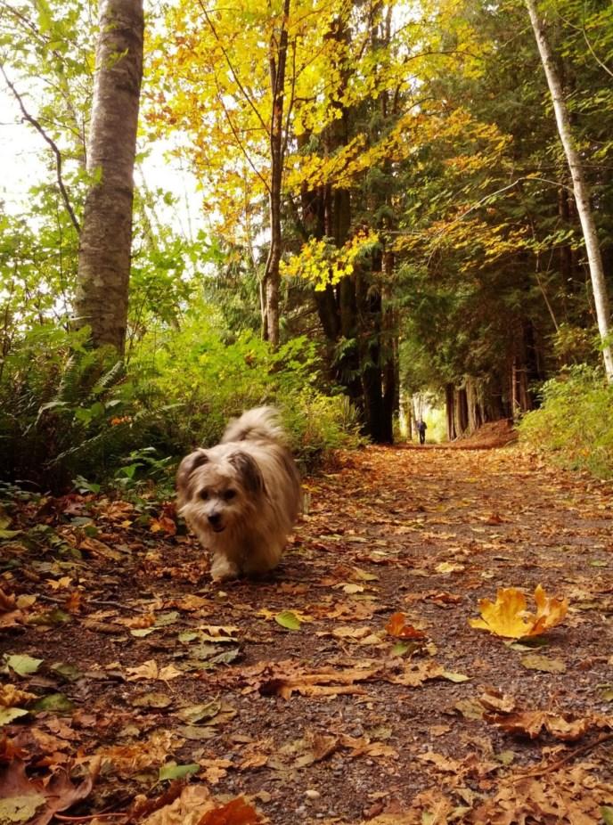 Killarney Lake hiking trail, Crippen Regional Park, Bowen Island hikes, easy hiking trail, dog-friendly hiking trail, hikes near vancouver
