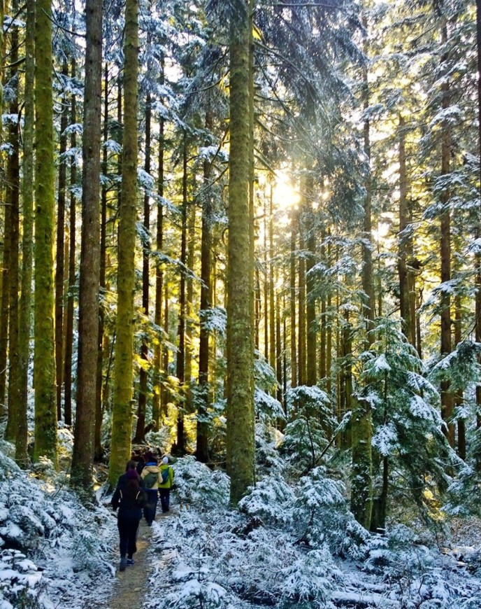 Lynn Loop winter hiking trail, Lynn headwaters trail, hikes near vancouver, north vancouver hikes, north short hiking trail, dog friendly hikes