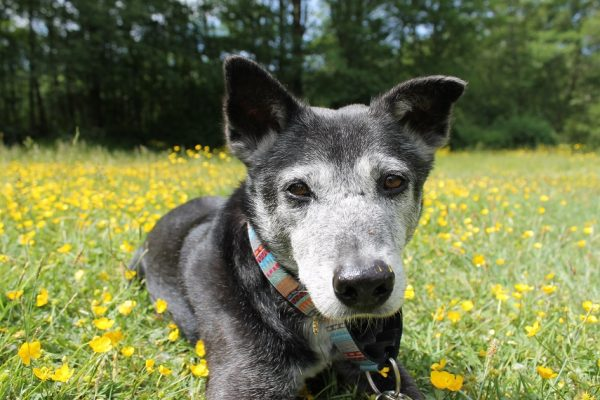 hello i am floyd, walks and wags, on-leash hiking trails near vancouver, dog-friendly hikes