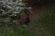 A brave little bunny checked us out!