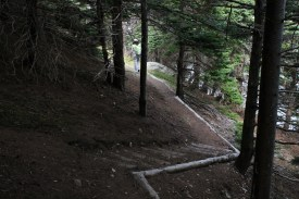 The trail starts through woods.