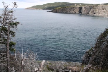 When the trail approaches the cliff edge, the views pf Middle Cove are spectacular.