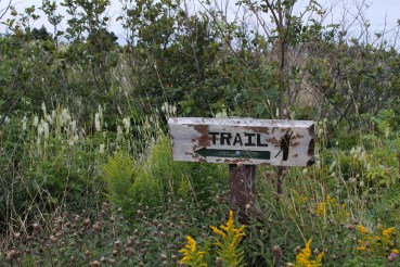 The trail continues alongside a road in Ferryland.