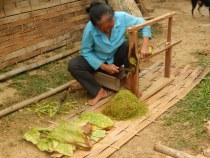 Dorfbesuch - Frau beim Tabak schneiden