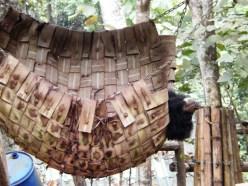 Bear Rescue Center - auch Bären fühlen sich offensichtlich in Hängematten wohl