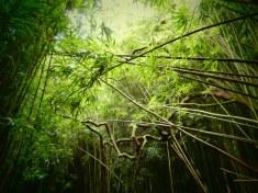 Verzauberter Bambuswald