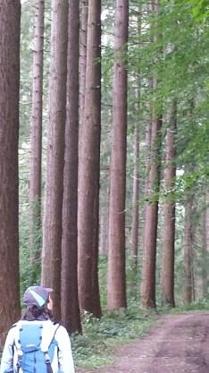 woods2015-09-09 05.50.05