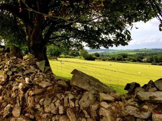 pastoral scene20180830_154053