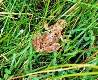 frog20180906_171522