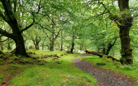 green trail20180902_195928