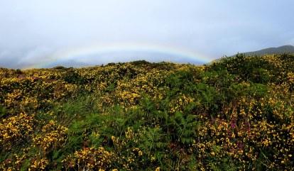 rainbow20180902_200722