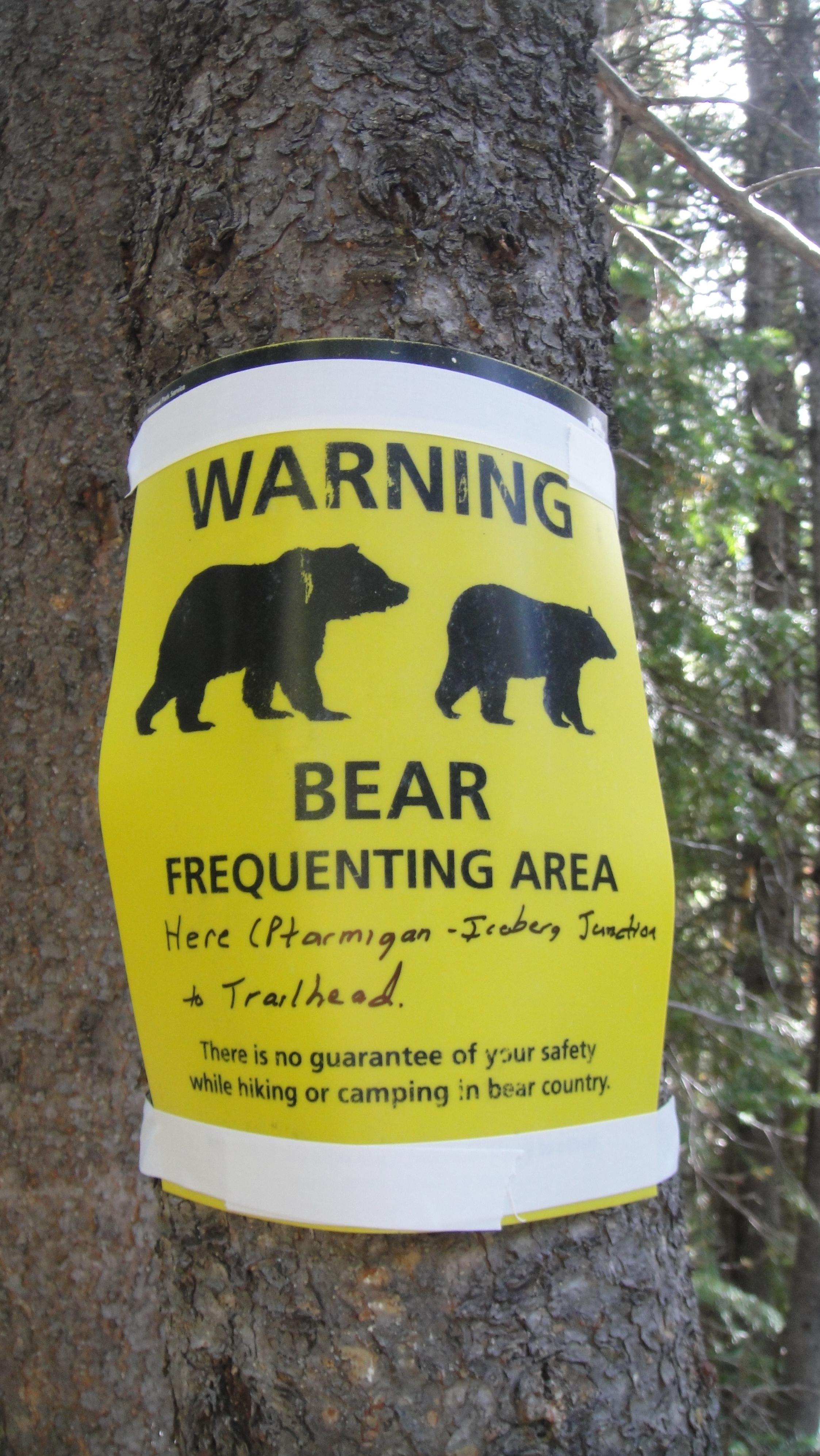 bear-safety.jpg