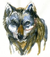 watercolor-wolf-1