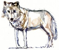 watercolor-wolf-4