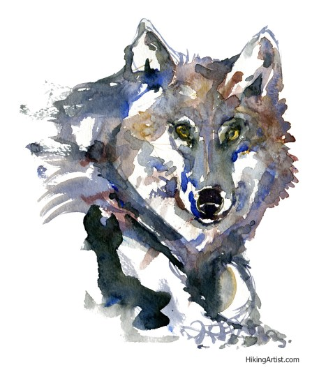 watercolor-wolf-7-clean