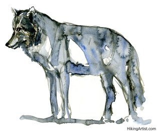 watercolor-wolf-8-clean