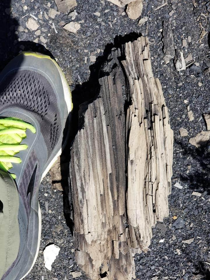 petrified wood in wyoming
