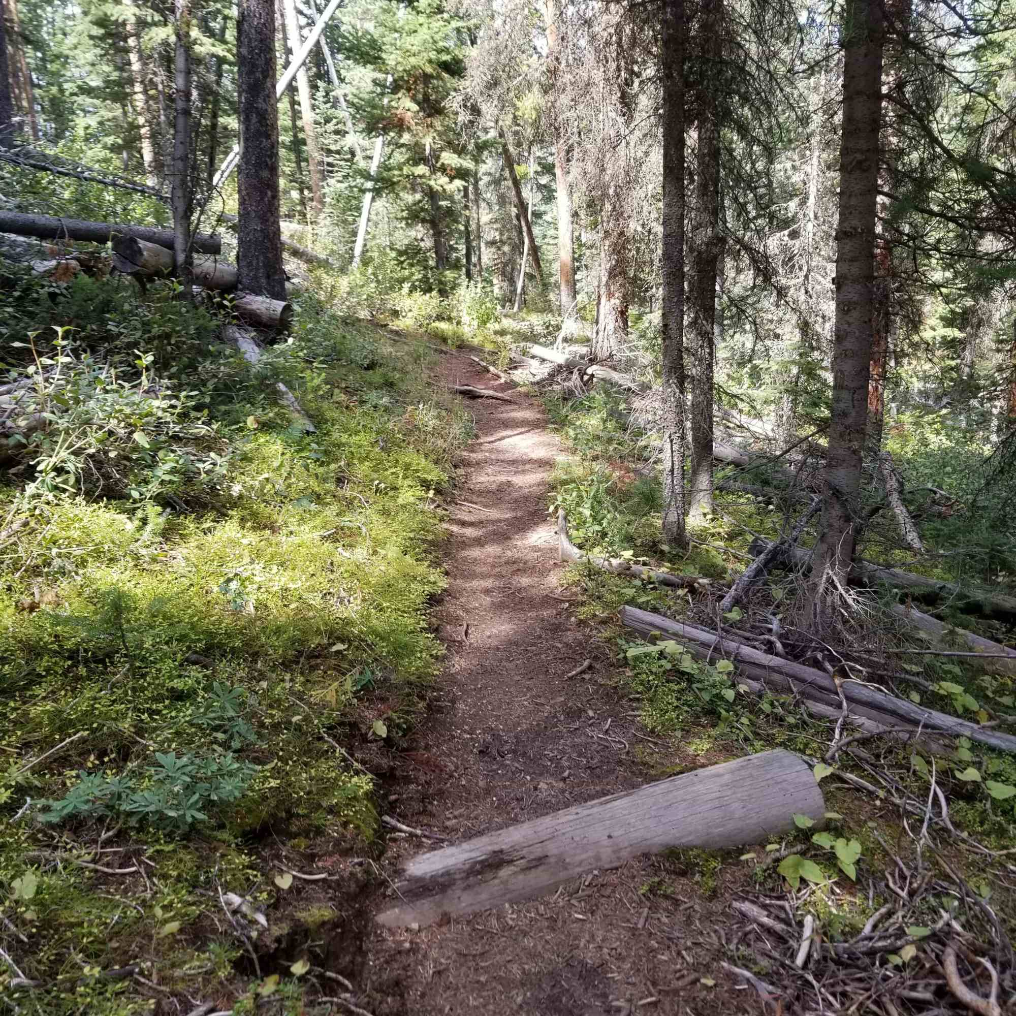Dry Fork Trail, Gros Ventre Wilderness, Wyoming