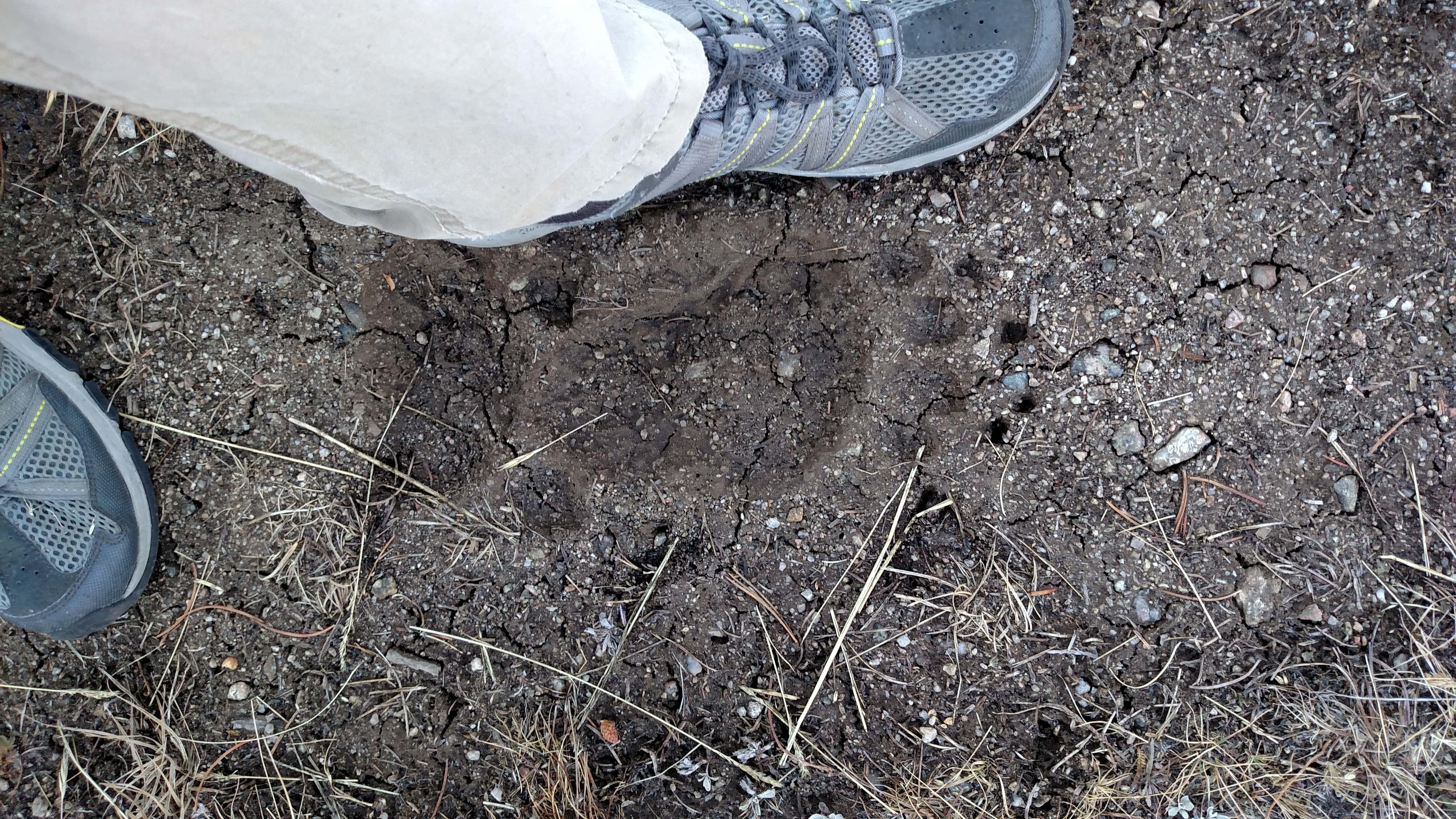 Bear print in Wind River Range