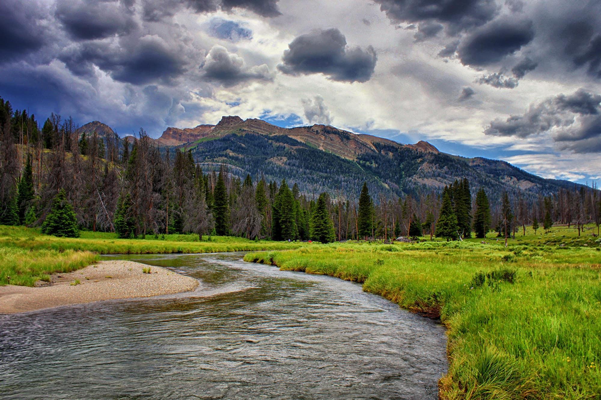 Clear Creek, Wyoming meadow