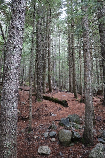 Trees at Lost Lake, Whistler